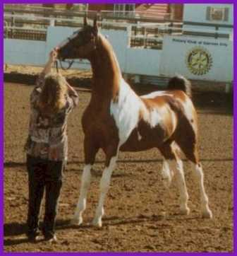 Rocky's left side with Connie in show ring